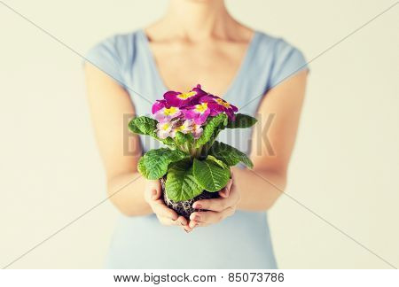 close up of woman's hands holding flower in soil