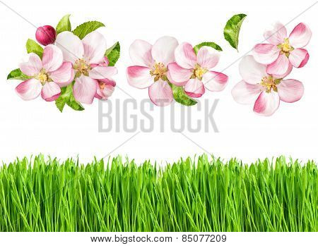 Spring Nature Objects. Apple Tree Blossoms And Fresh Green Grass