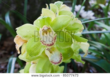 Beautiful Orchid On Green Background In The Nature