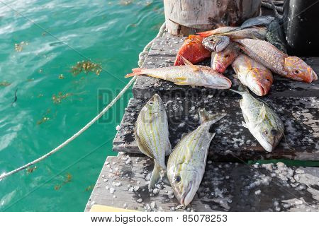 Catched Fish On Wooden Pier