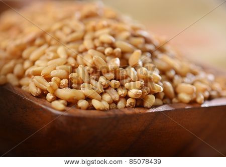 Extreme close up of golden wheat grains.