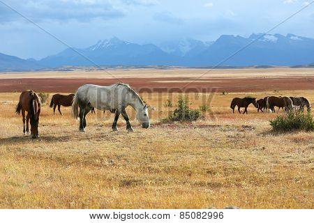 Horses grazing in argentinian farmland