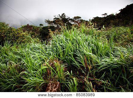 Lush jungle vegetation in mist