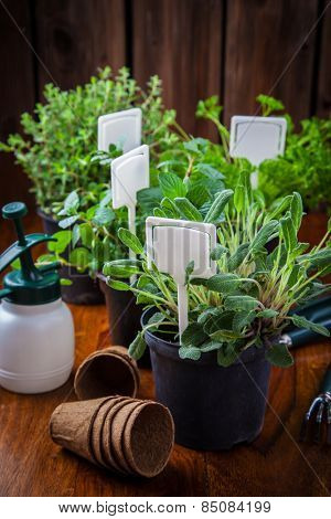 Different herbs for planting with garden tools