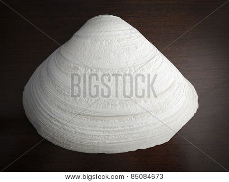 Instagram style image of a seashell on wood background