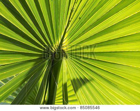 Abstract Closeup of Green Plant (Sun Back Light)
