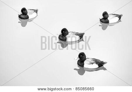 Ducks In Pond (Text Friendly) - Black & White