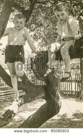 Vintage photo of two brothers sitting on tree, early 1950's