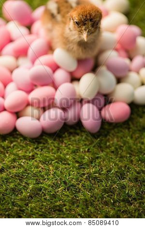 Stuffed chick with easter eggs on green grass