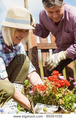Happy mature couple gardening together outside in the garden