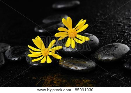 two Gerbera with wet stones on wet