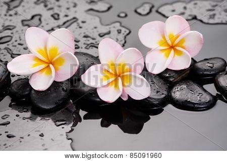 Zen stones and frangipani on wet background