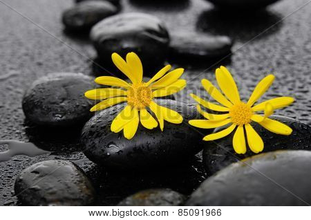 two yellow flower with wet stones on wet