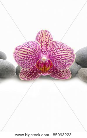 Spa stones and orchid isolated on the white background