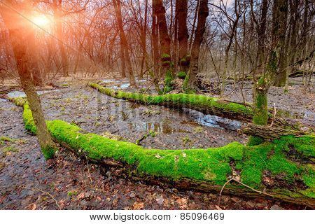 sunset on bog in deep forest