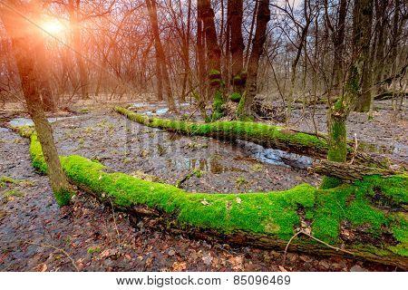 sunset on bog in deep forest