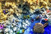 image of shoal fish  - Wonderful and beautiful underwater world with corals and tropical fish. ** Note: Visible grain at 100%, best at smaller sizes - JPG