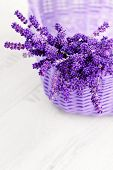 picture of lavender plant  - basket full of lavende  - JPG