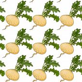 pic of turnips  - Turnip seamless in vector illustration - JPG