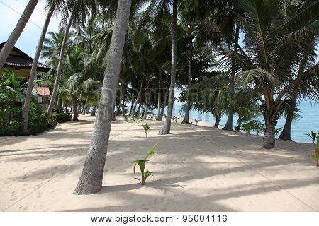 Scenic View Of Maenam Beach, Koh Samui