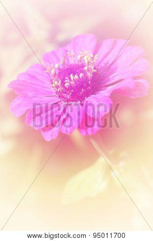 Flower bright background