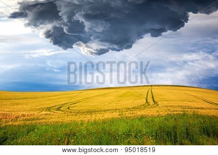 Yellow Field On Dramatic Sky