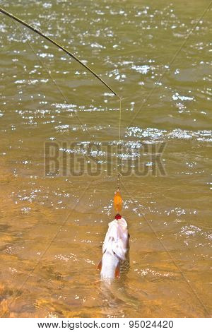 Hampala barb hook Metallic Fishing Lure