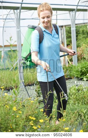 Young Woman Spraying Plants In Polytunnel At Garden Center