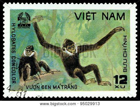 Vintage  Postage Stamp.   Black Crested Gibbon.