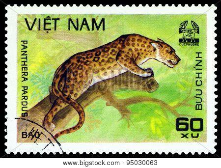 Vintage  Postage Stamp.   Leopard.