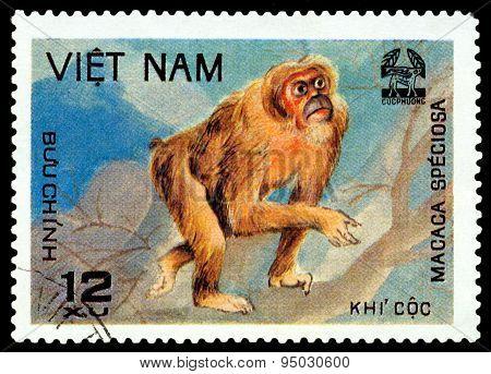 Vintage  Postage Stamp. Macaca Speciosa.