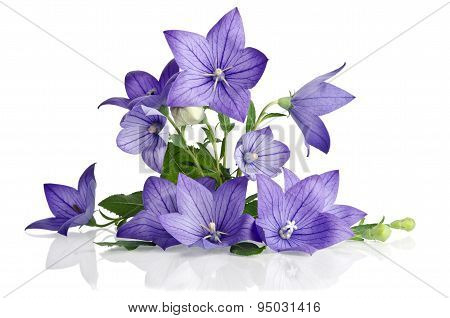 Beautiful  Bouquet From Bell Flowers Isolated On White  Background