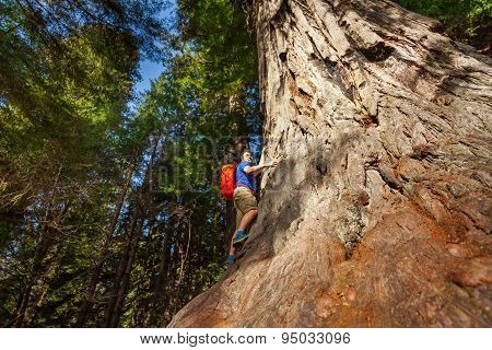 Looking man with backpack climbing on big tree