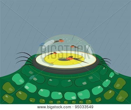Eye tank and small fishes.