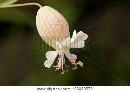 Wild White Flower Close-up.