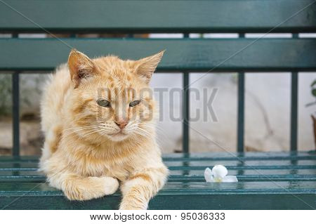 Tiger Color Cat Sitting  On A Green Bench
