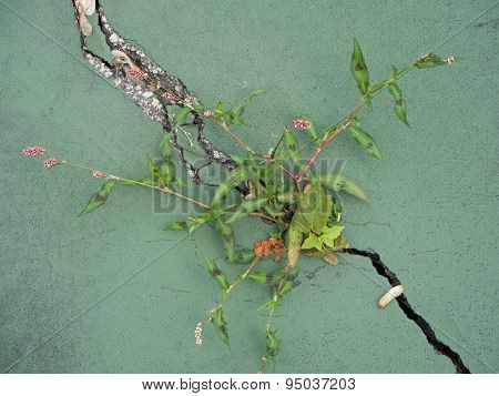 Weeds In Tennis Court