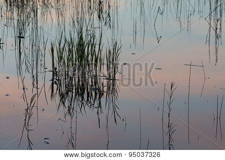 Grass Lake Reflection