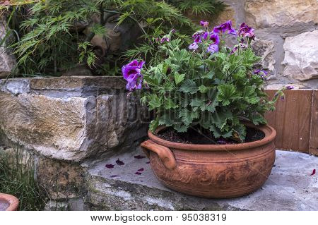 Fresh Flowers In Decorative Pot