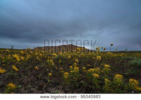 Yellow Flowers Cottonwood Canyon Road Utah