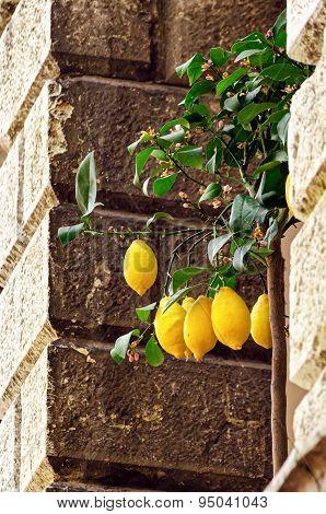 Lemons In Limone Sul Garda, Lago Di Garda