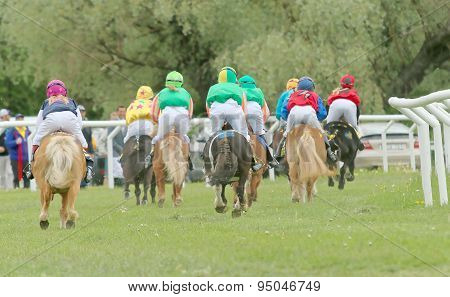 Rear View Of A Large Group Of Racing Ponys