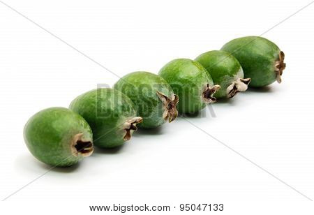 Tropical Fruit Feijoa Standing In A Line