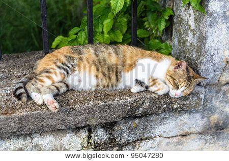 Cat In Perast City, Montenegro