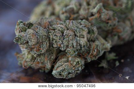 Medicinal Medical Marijuana Close up