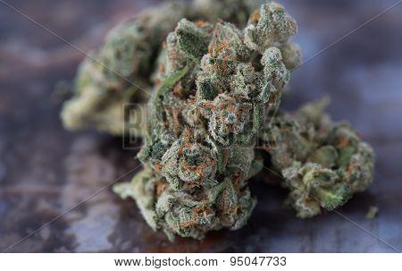 Medicinal Marijuana Close up Macro