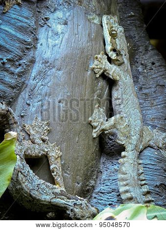 Webbed-footed lizards