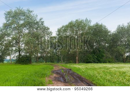 Landscape with road between flowering buckwheat and wheat field in central Ukraine