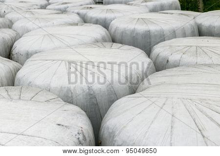 Hay Wrapped In White Bales
