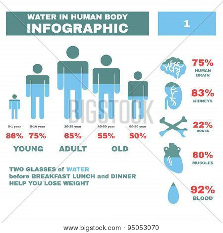 Water in Hyman body Infographic. Vector